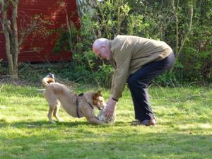 anbellen anderer hunde